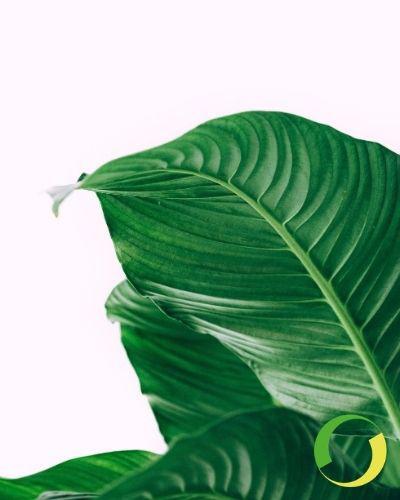 Steba e i progetti green